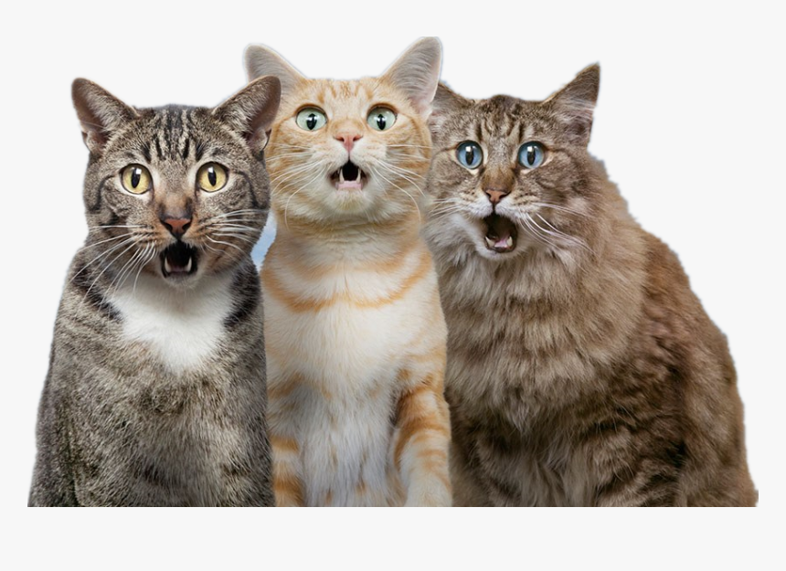 Cat Dog Pet Surprised Cat And Dog Hd Png Download Transparent Png Image Pngitem