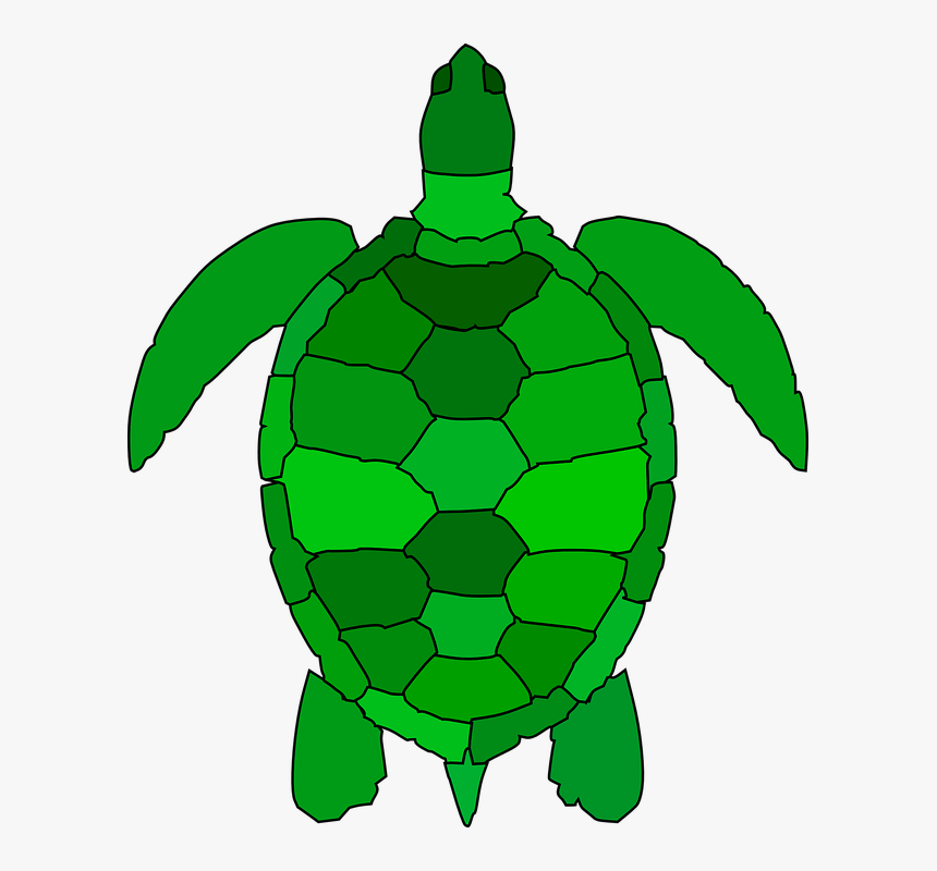 Turtle Animal Reptile Water Green Ocean Shell Sea Turtle