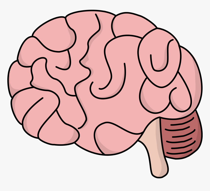 Image For Free Brain Brain Clipart Transparent Background Hd Png Download Transparent Png Image Pngitem
