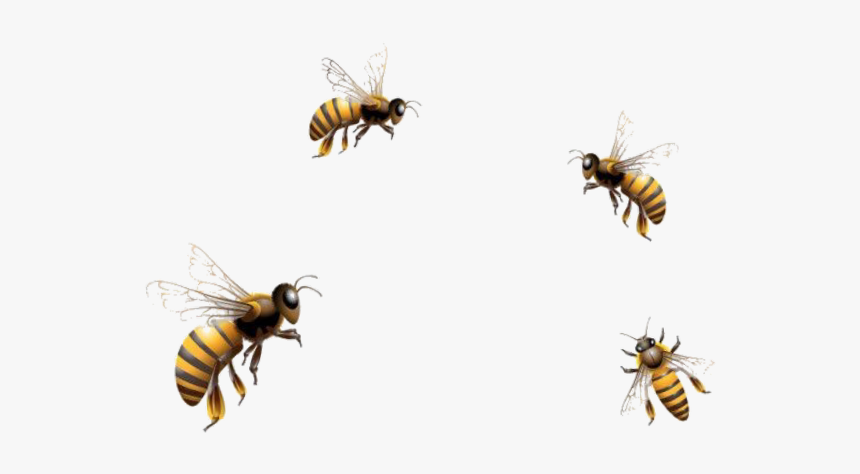 Mq Bees Bee Insect Flying Fly Flying Honey Bee Png Transparent Png Transparent Png Image Pngitem Free icons of bee in various design styles for web, mobile, and graphic design projects. mq bees bee insect flying fly